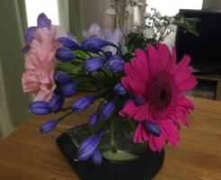 2018年6月後半の花